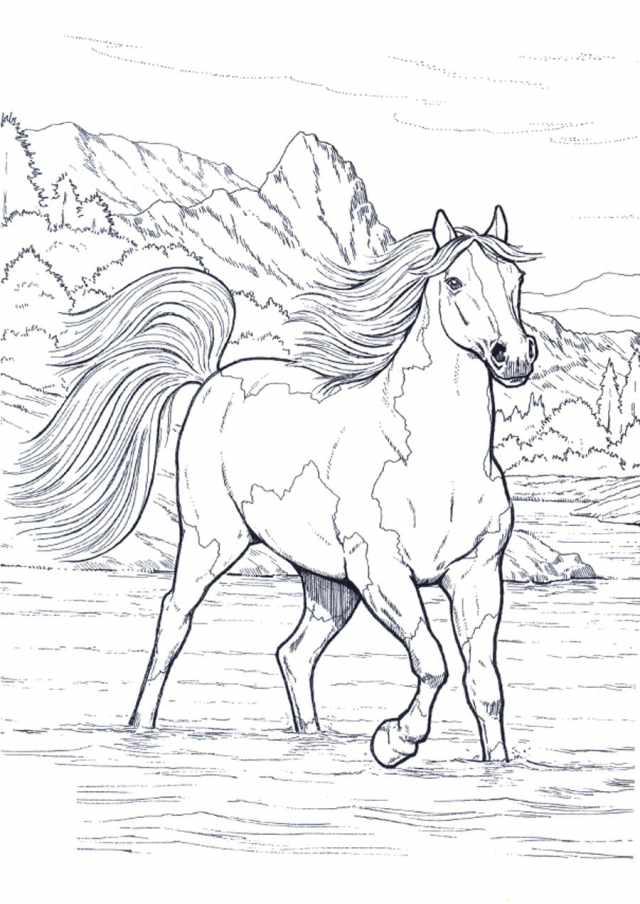 Ausmalbilder Pferd. Große Sammlung, 11 Stück. Online drucken