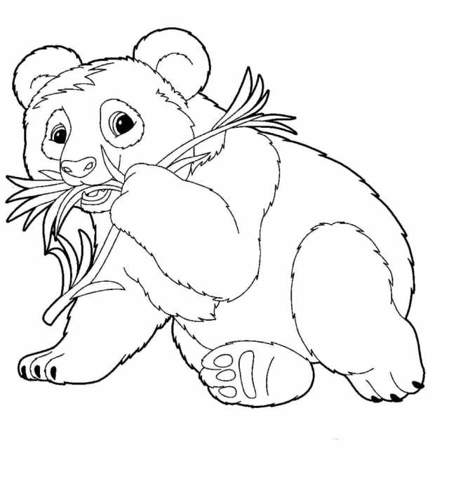 Panda Coloring Pages  8 Pictures Free Printable