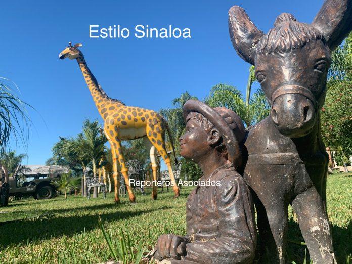 """Resultado de imagen de safari en sinaloa"""""""