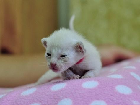 Zdjęcie kotki Wenus