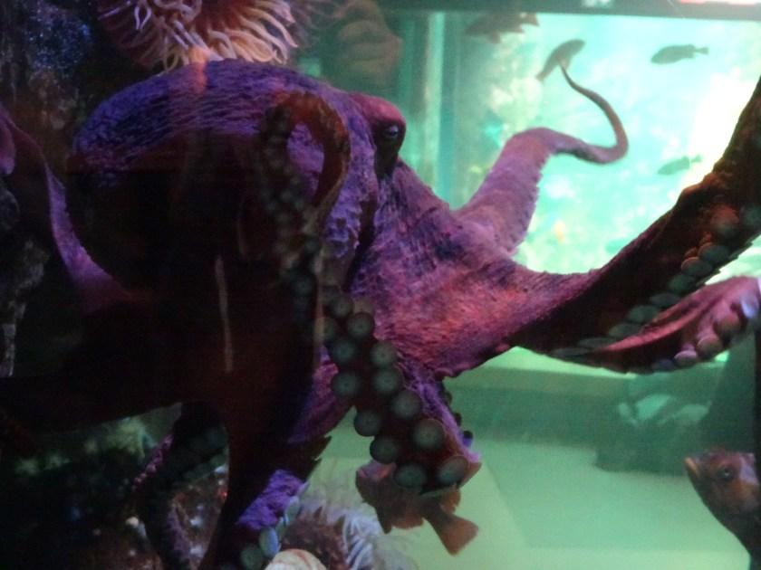 vancouver aquarium (6)