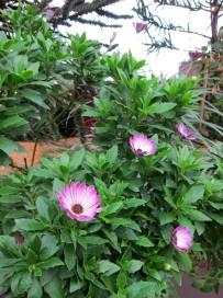 flowerdome-01