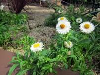 flowerdome-03