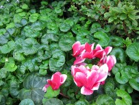 flowerdome-06