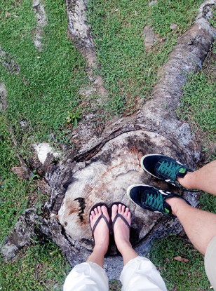 Today, we went to Ridout Garden. While taking a walk, we spotted a tree stump. This tree is older than I am! What a pity it was chopped down. :(