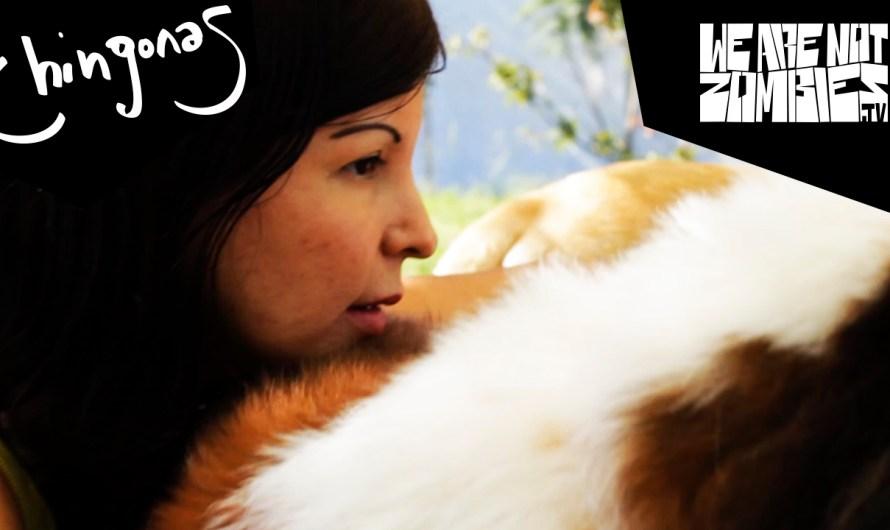 Una chingona que ve por los animales @ WeAreNotZombies.com