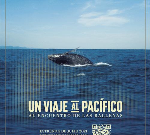 Un viaje al Pacífico: Al encuentro con las ballenas