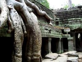 Ta Prohm-Tempel in Angkor