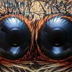 Salticidae - Göz Detayı