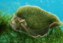 Yarı Bitki Yarı Hayvan Canlılar: Deniz Sümüklü Böcekleri