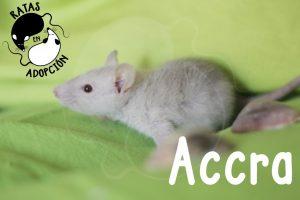 Accra-1024x683