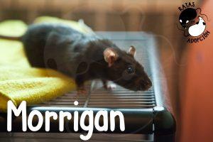 Morrigan-1024x683