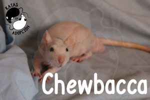 chewacca