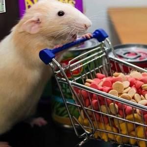 Para ratas