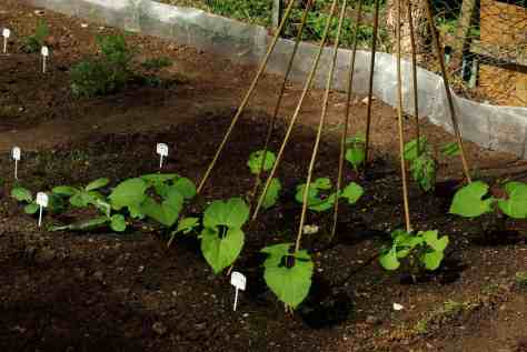 Vertical Gardening. Credit: Pixabay