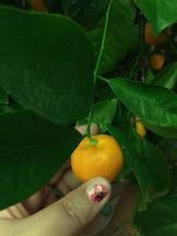 Tiny orange plant