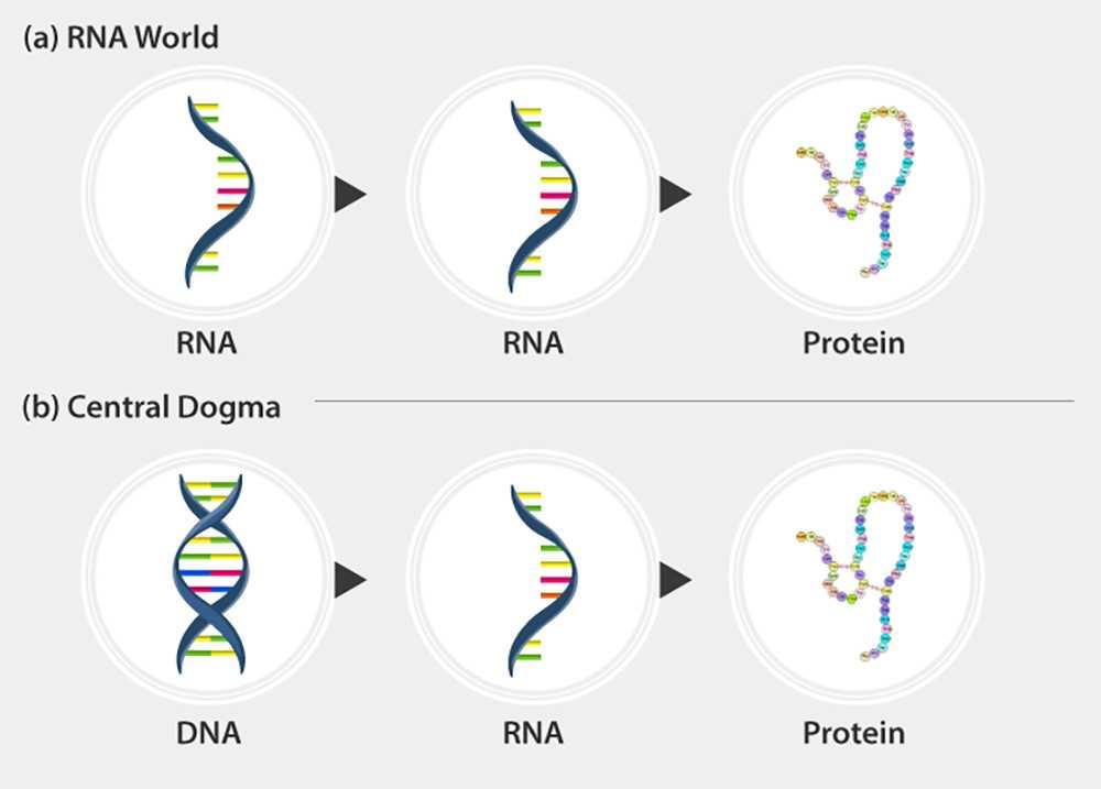 РНҚ әлемі Жердегі өмірдің пайда болуы туралы болжам ретінде