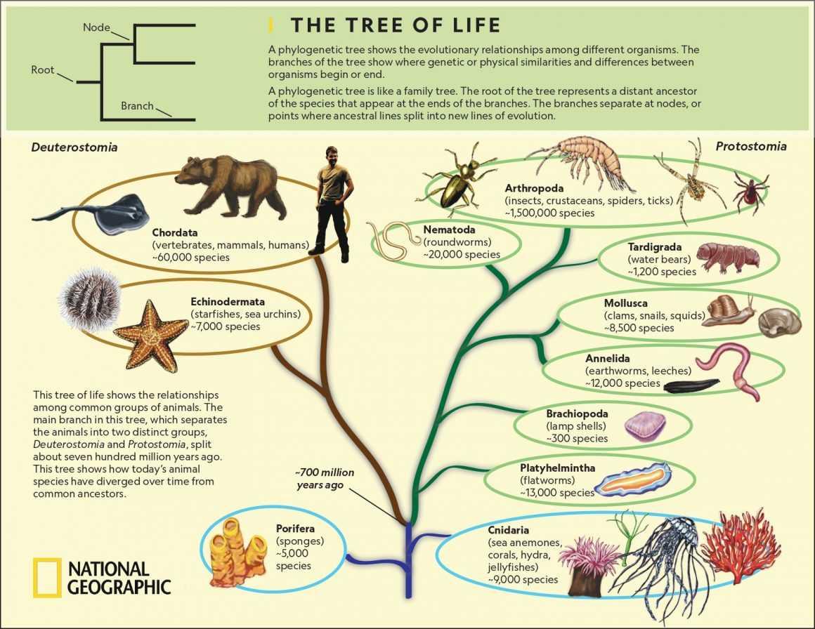 Филогенетикалық ағаш және түрлердің эволюциясы