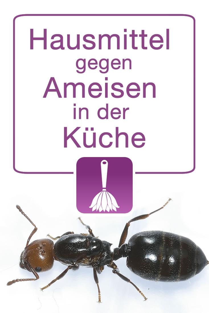 Hausmittel gegen Ameisen in der Küche
