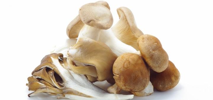 Pilze Schwangerschaft