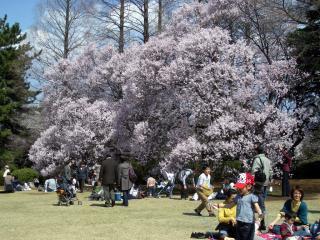 芝生広場(2008/03/26、昼撮影)