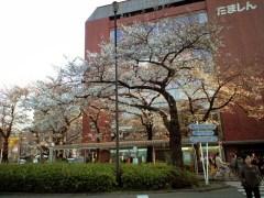 駅前のソメイヨシノ(2009年3月30日夕方撮影)