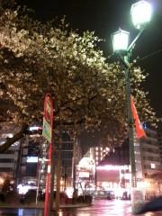 駅前の桜(2)(2010年3月23日夜撮影)