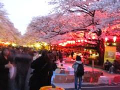 上野公園桜通り(2012年4月7日夕方撮影)