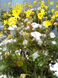 東京でも雪が降りました