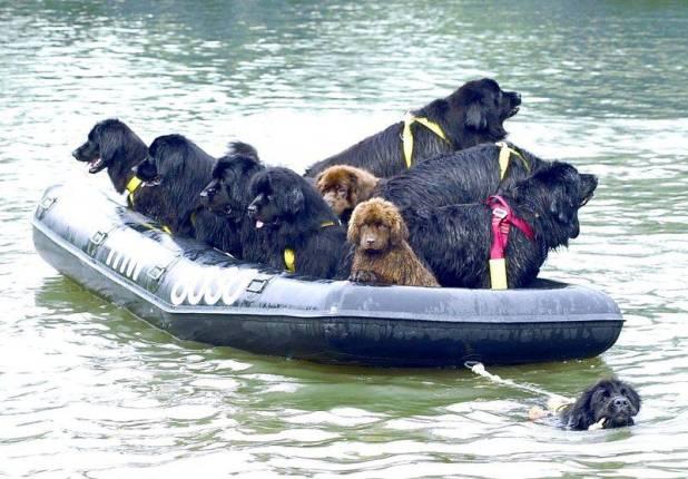 σκυλια ναυαγοσωστες