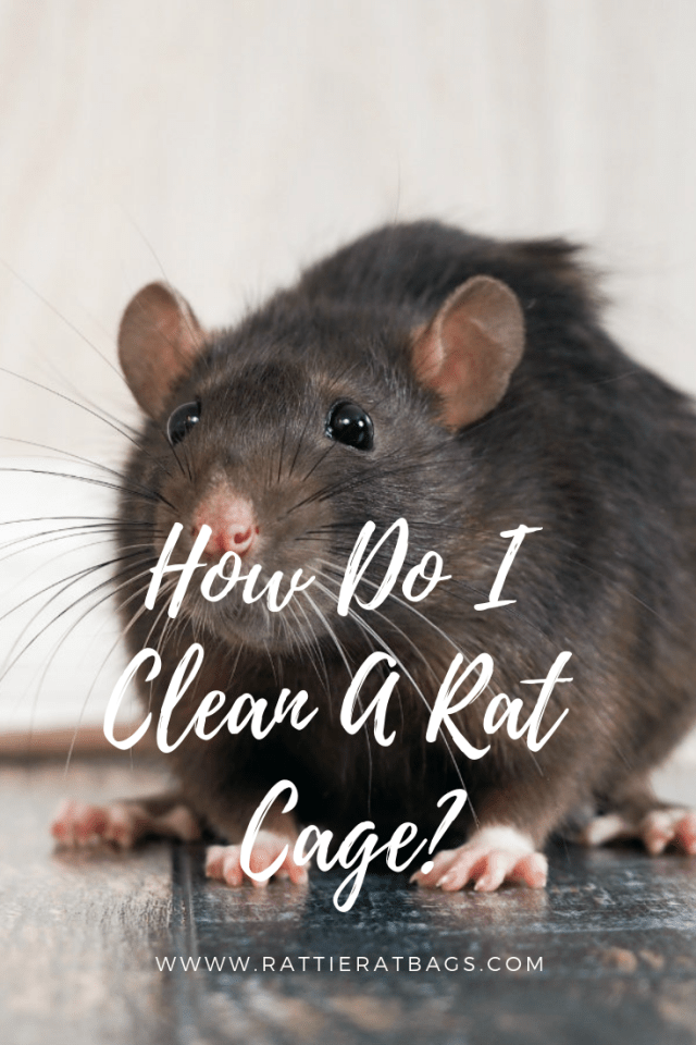 How Do I Clean A Rat Cage - www.rattieratbags.com