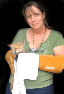 verron-baby-fox-kit