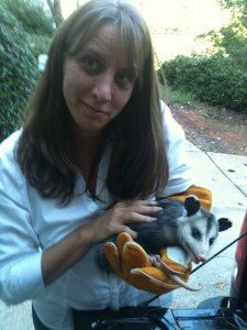 possum trapping dawsonville