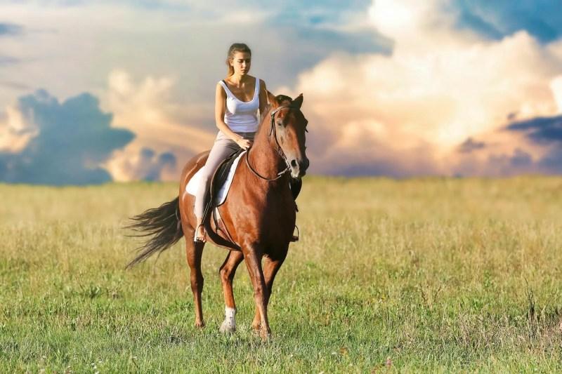 Att upprätta avtal vid köp av häst är en trygghet för både säljare och köpare