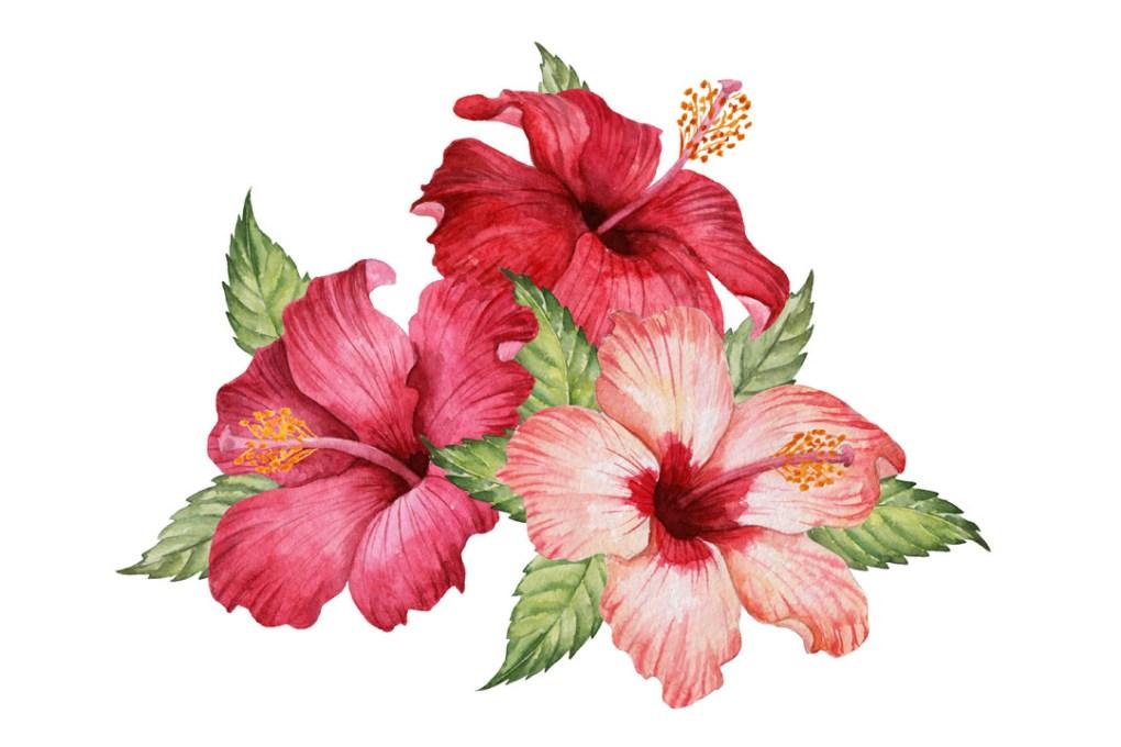 Hibisbusblüten Artikelbild