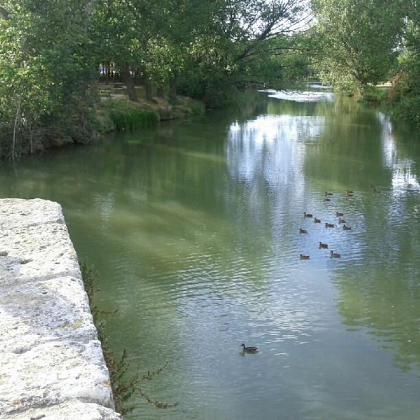 Vista típica desde Puentecillas #Palencia