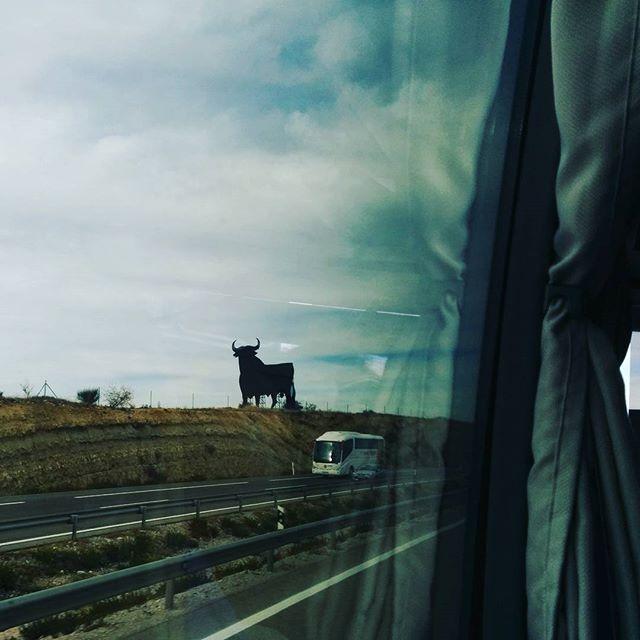 ¡Coñe! ¡Un toro! #VOYaJPOD15 #jpod15zgz