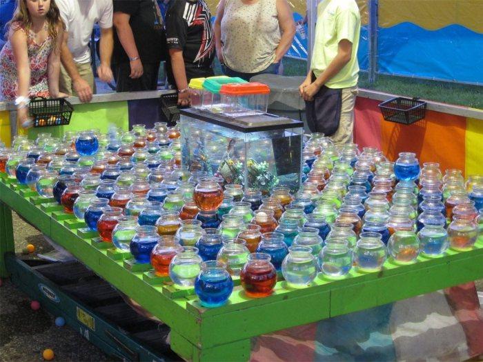 Goldfish ping pong bowls at Algonac Pickeral Tournament