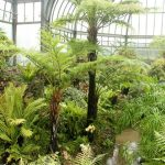 the Ferney at the Anna Scripps Whitcomb Conservatory