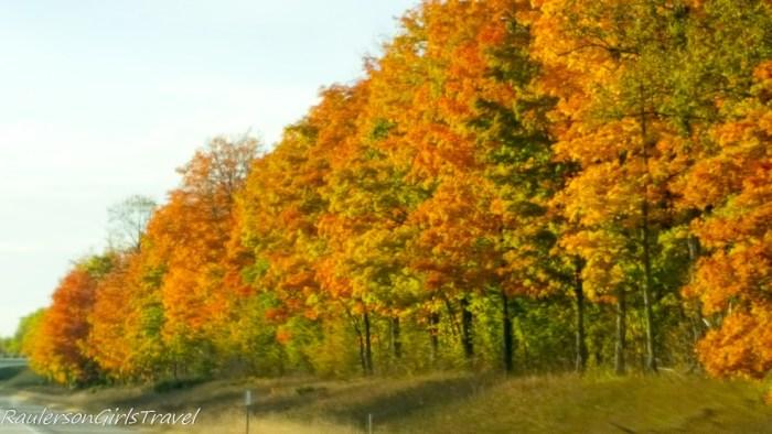 Colorful Trees along I-75