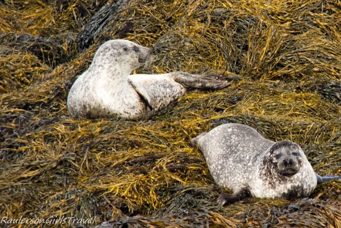 Two seals on Kenmare Bay Seafari cruise