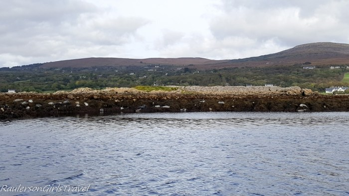 Harbor Seals in Kenmare Bay-Seals on the Seafari Cruise