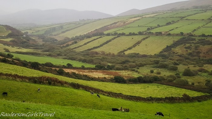Green Irish Landscape with cows in pasture
