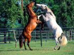 caballos sibaritas.jpg