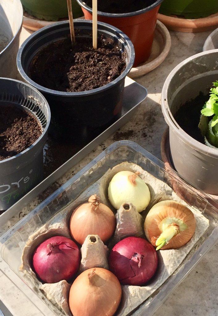 Ostern zuhause mit Zwiebelplantage