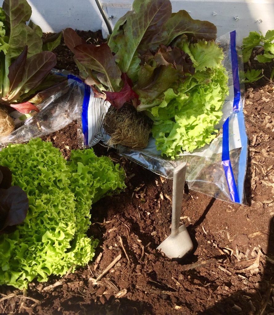 nachwachsende Rohstoffe salat