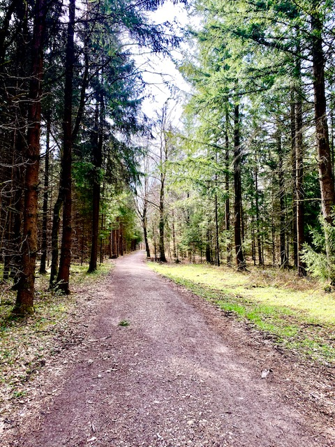 Neue Wege gehen, der Wald zeigt uns wie