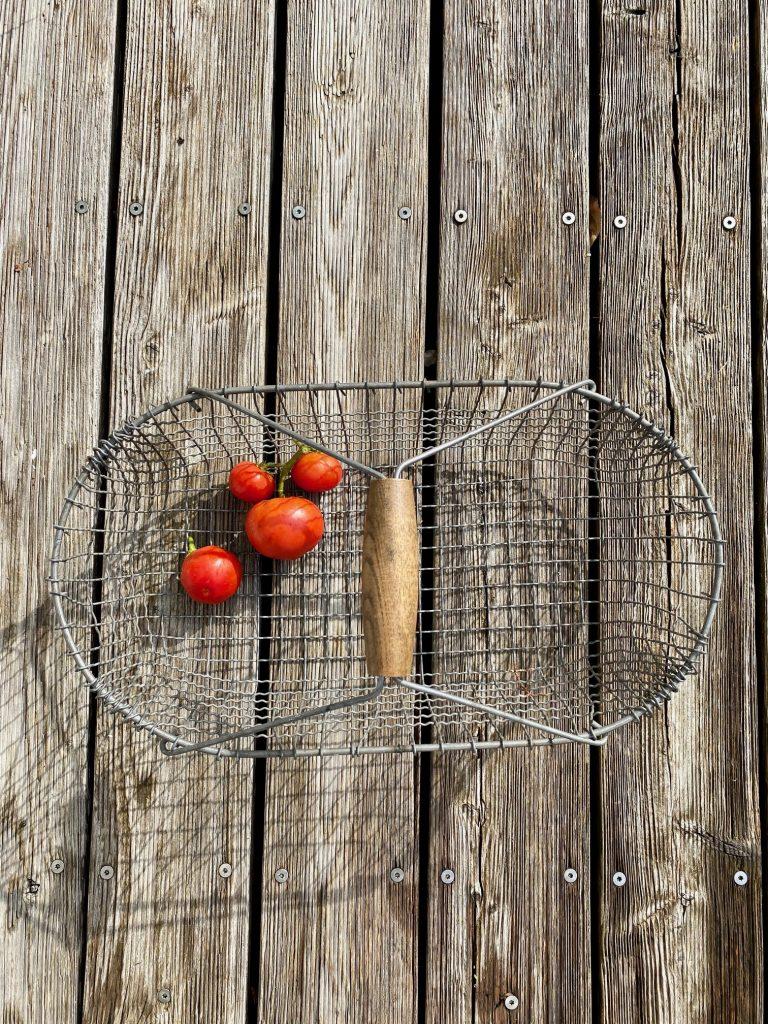 happy mit der ersten Tomatenernte