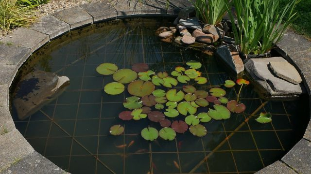 Zierteich mit Wasserpflanzen