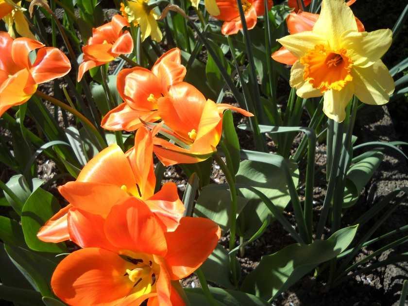 Wo beginnt in Deutschland der Frühling zuerst?